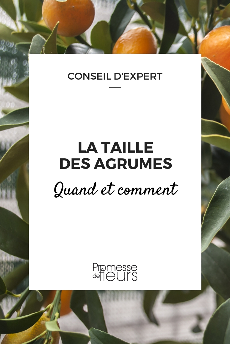 tailler les agrumes