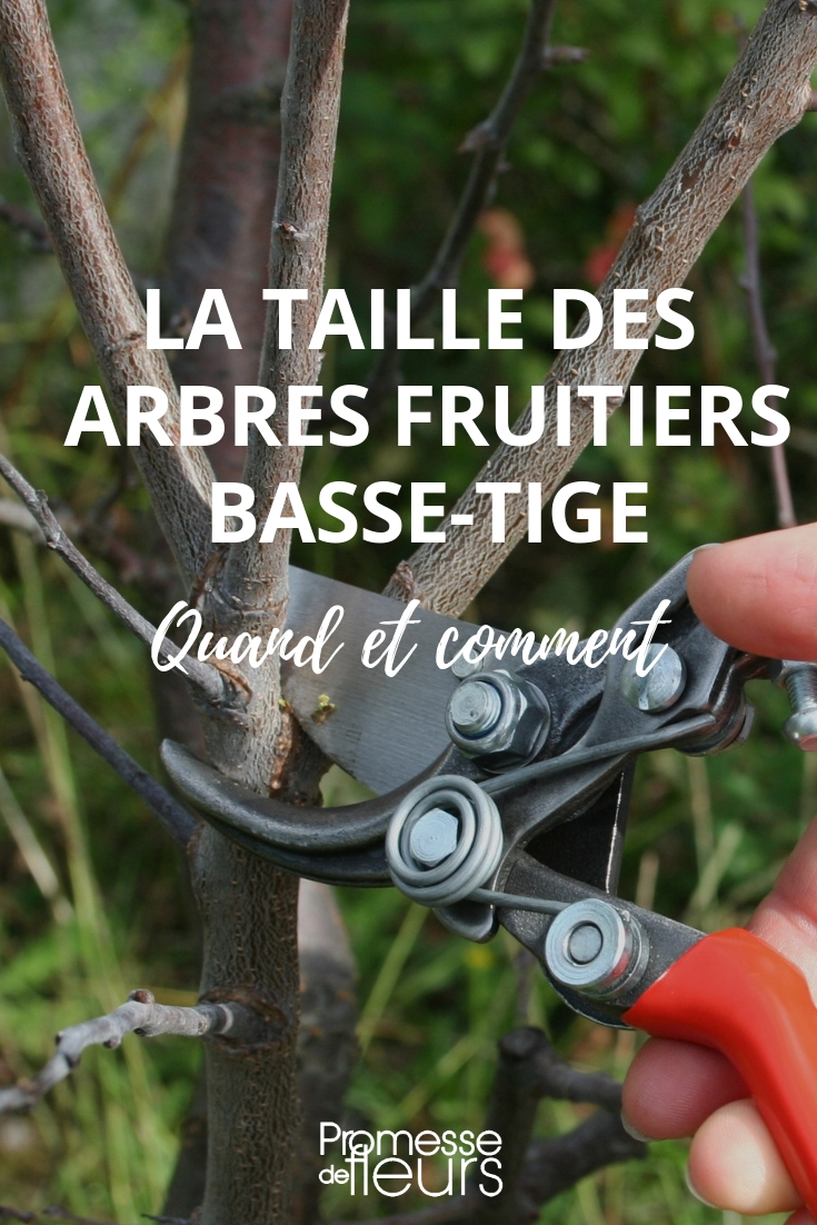 tailler des arbres fruitiers basse tige