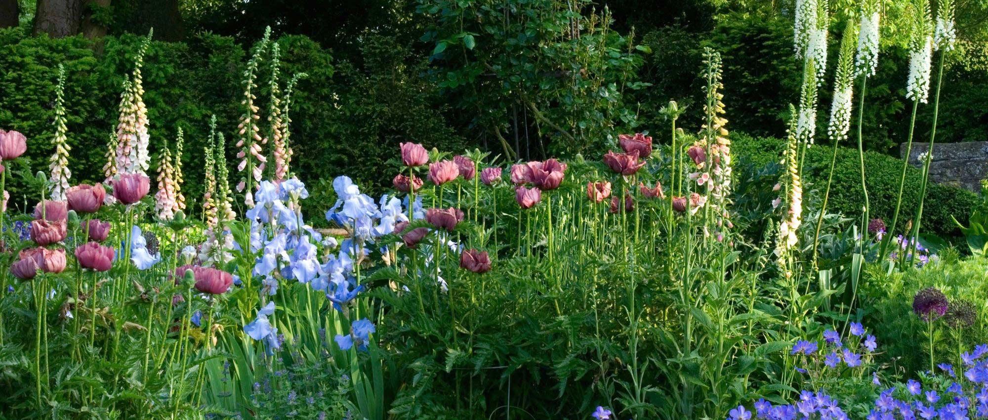 Les Jardins À L Anglaise jardin anglais : 10 plantes emblématiques pour l'aménager
