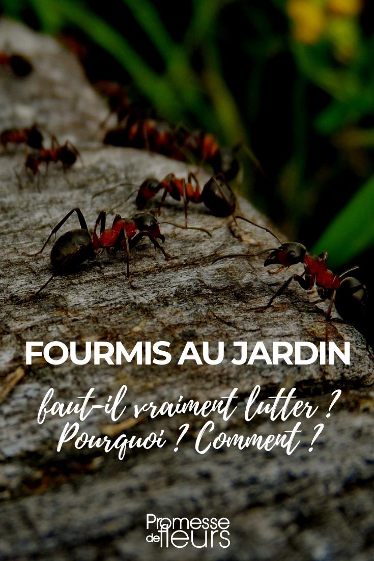 fourmis au jardin