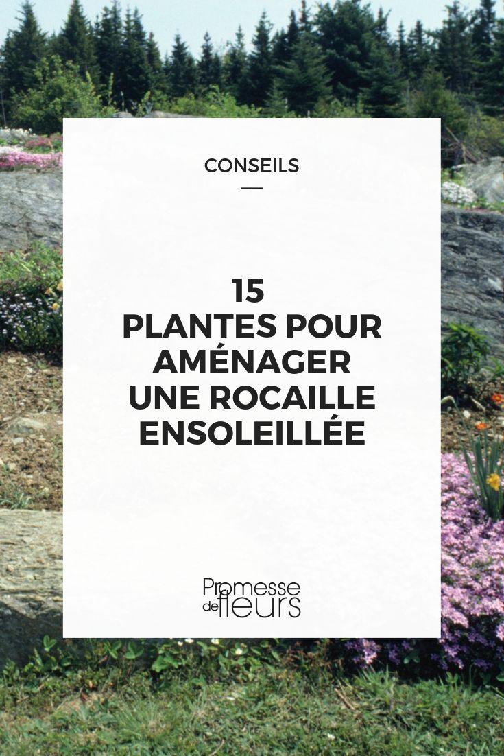 plantes pour rocaille