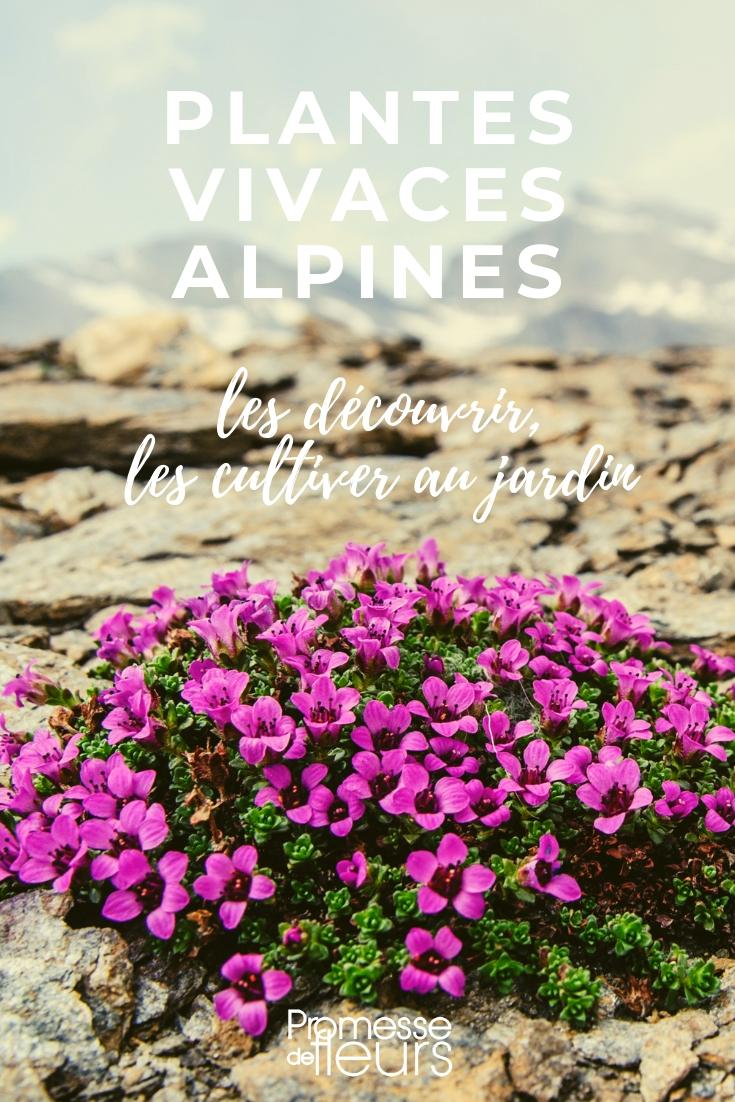 plantes vivaces alpines