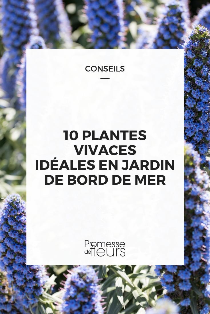 plantes vivaces pour jardin bord de mer