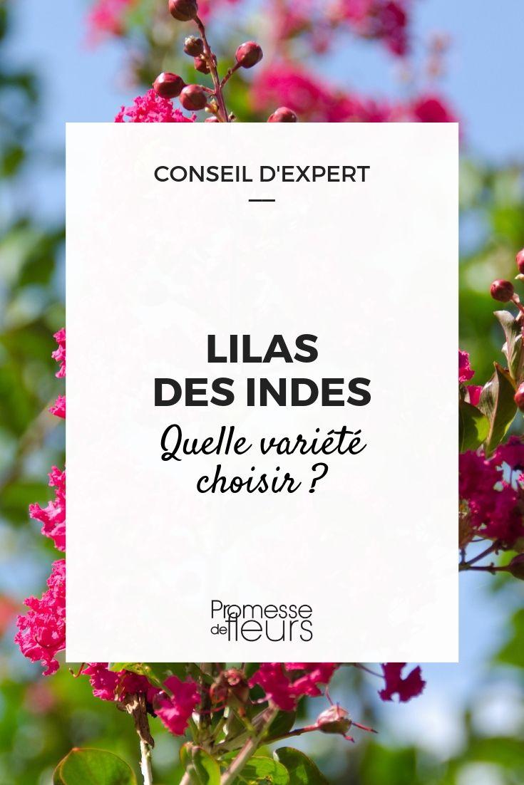 Lilas des Indes - Guide d'achat