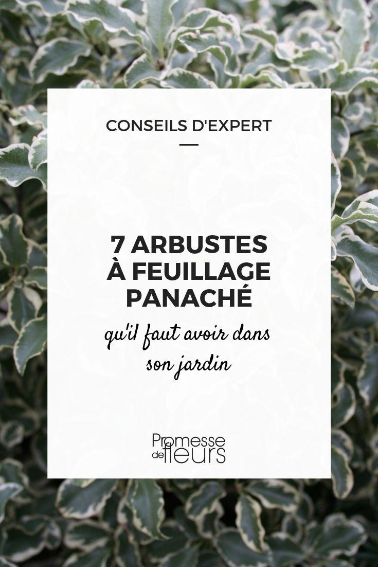 arbustes panachés