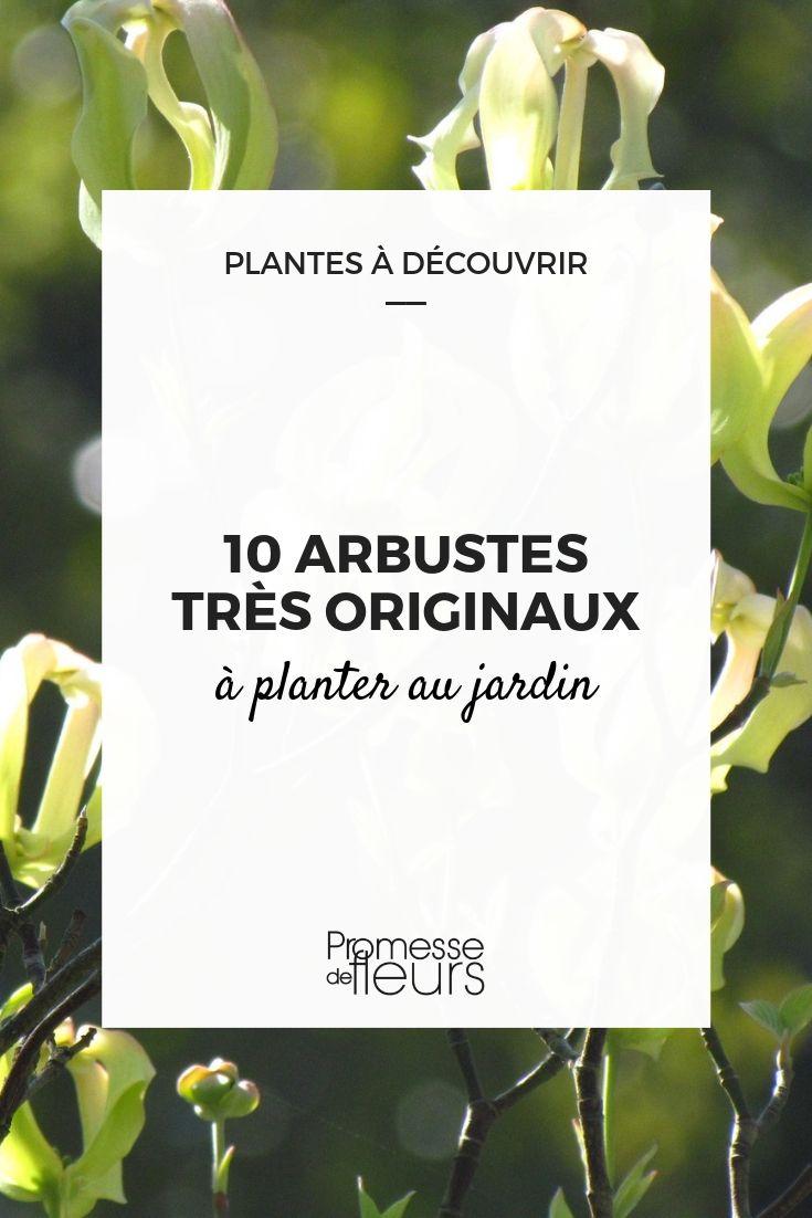 arbustes originaux