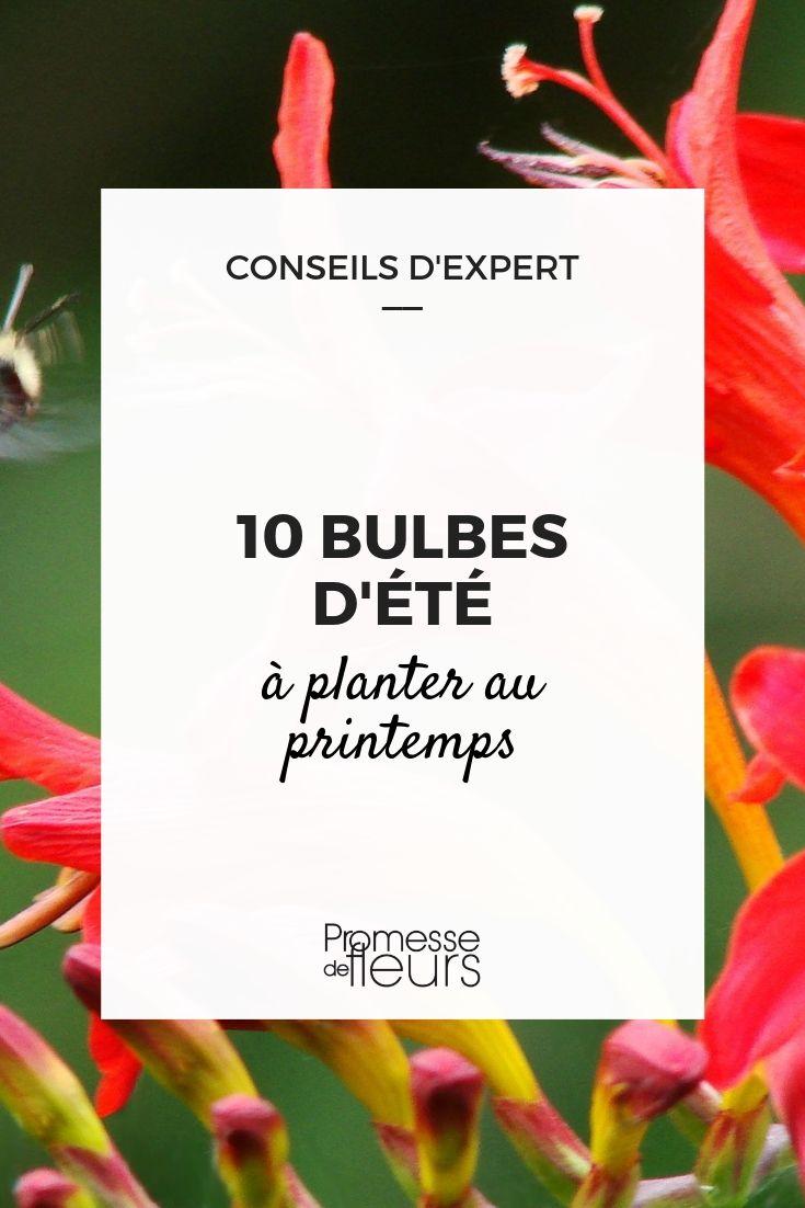 bulbes à floraison estivale