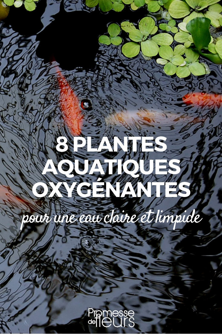 plantes oxygènante pour bassin