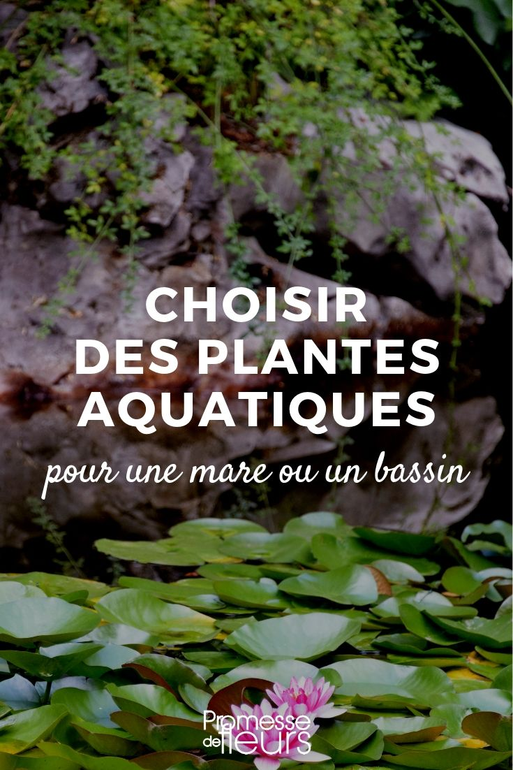plantes aquatiques : lesquelles choisir pour une mare ou un bassin