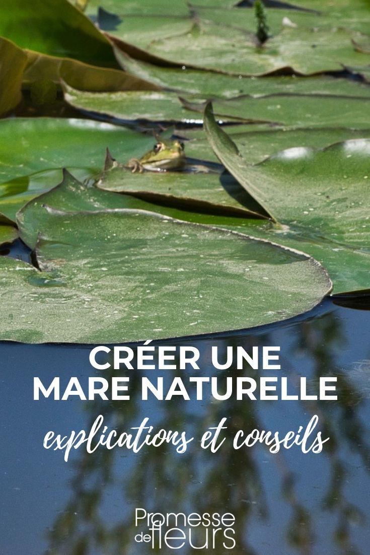 mare naturelle : comment la créer et l'aménager