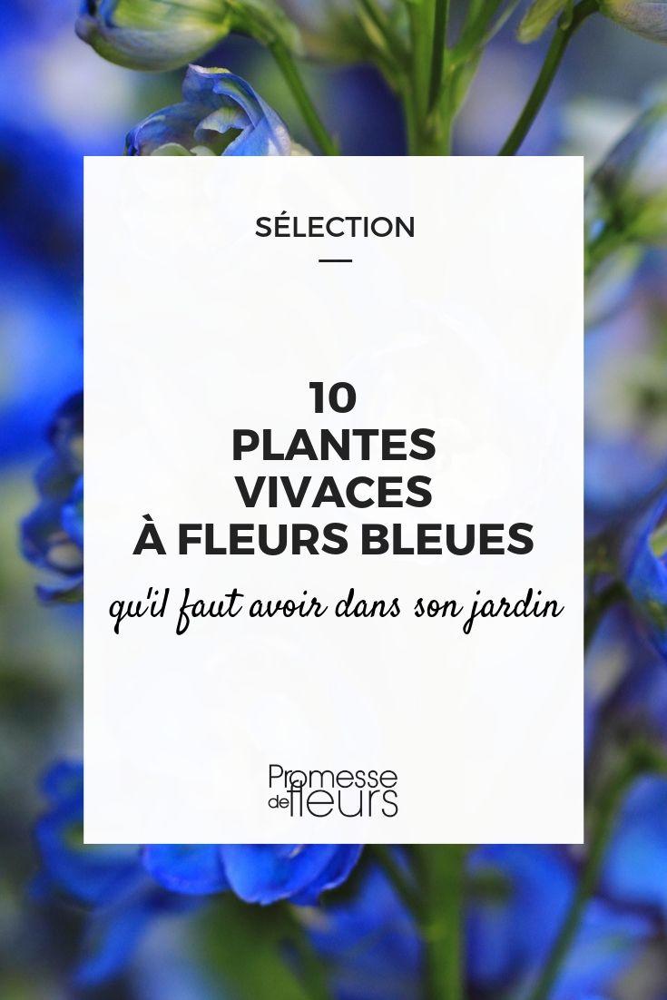 fleur bleue : les meilleures vivaces