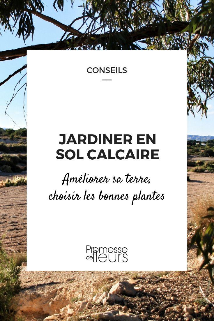 Sol calcaire : conseils de jardinage et plantes adaptées