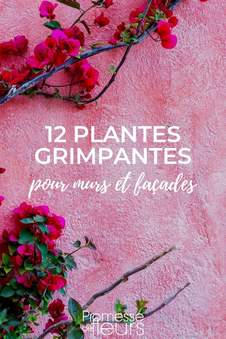 Plantes grimpantes pour habiller murs et façades
