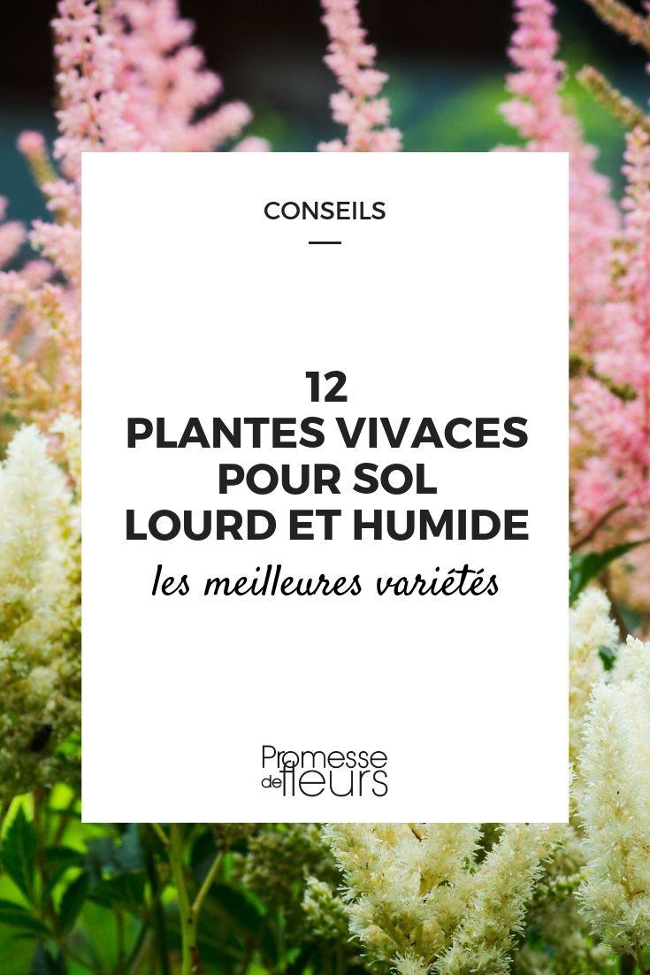 Arbuste Terrain Sec Ombre 12 plantes vivaces pour sol lourd et humide - promesse de fleurs