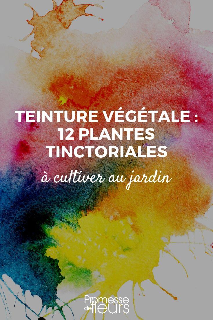 teinture végétale : plantes tinctoriales