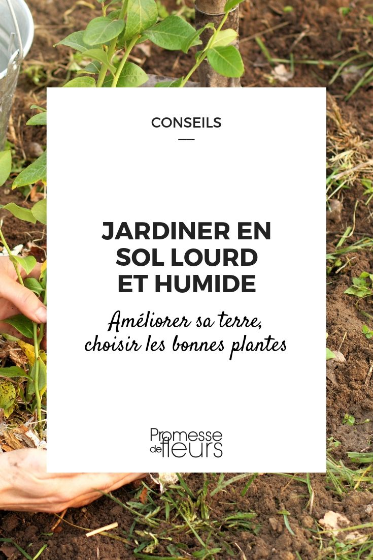 Quoi Planter Dans Une Terre Argileuse jardiner en terre lourde et humide - conseils et plantes