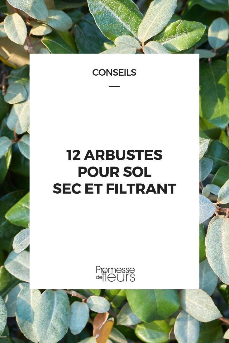 Plantes Pour Talus Sec 12 arbustes pour sol sec et filtrant
