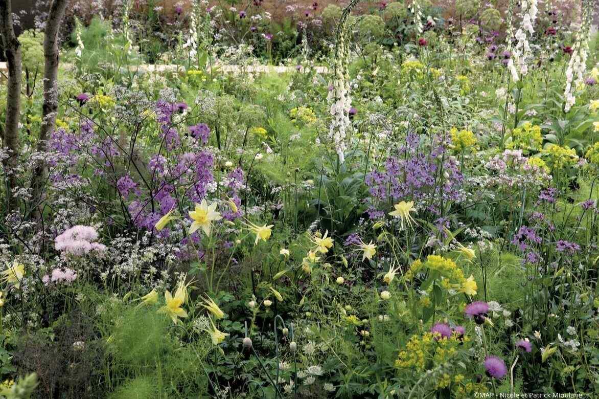 Aromatiques florissante parfumée plantes jardin d/'hiver Appartement Citron-Eucalyptus