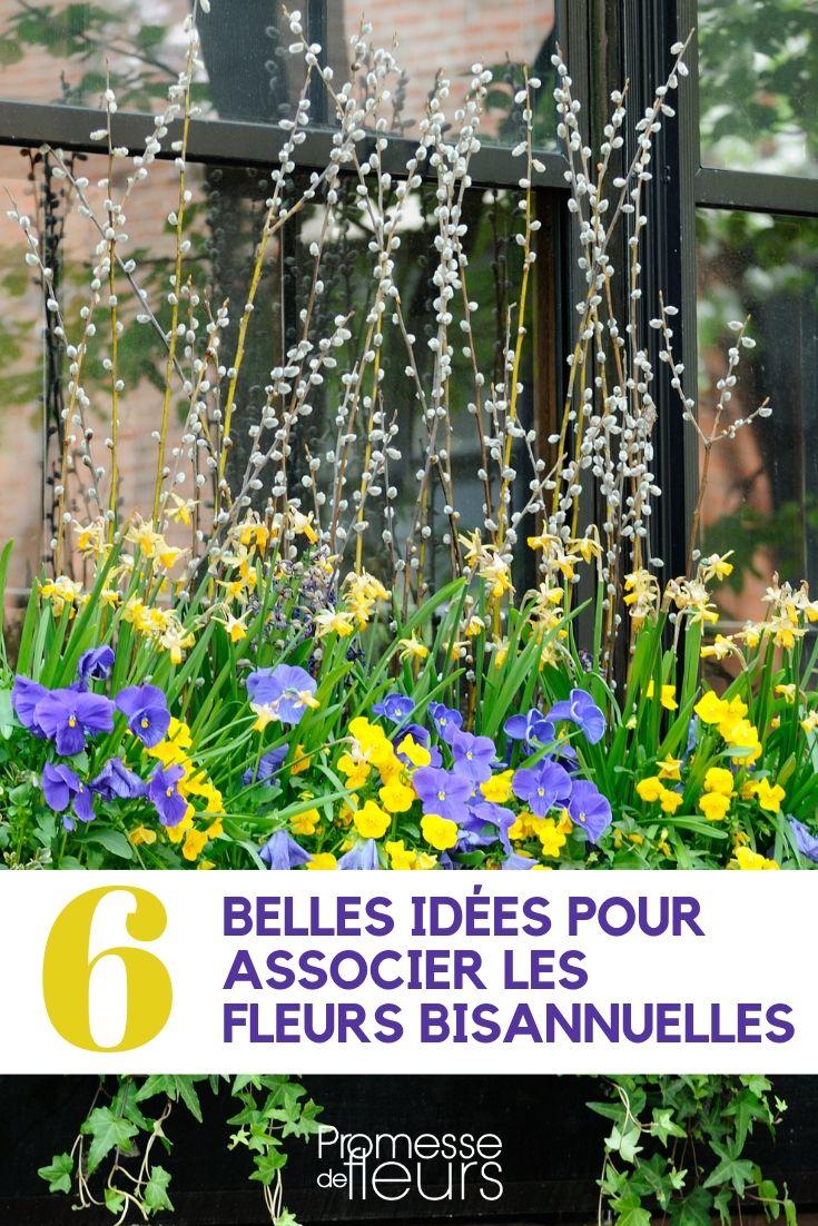 Fleurs bisannuelles : idées d'association