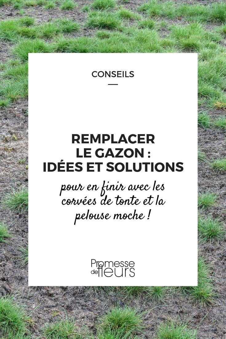 Remplacer la pelouse : idées et solutions