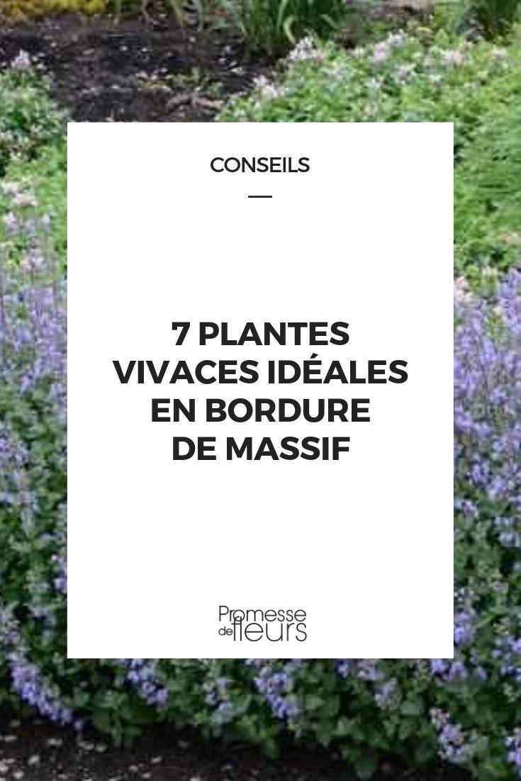 Planter Une Bordure De Buis 7 plantes vivaces idéales en bordure de massif