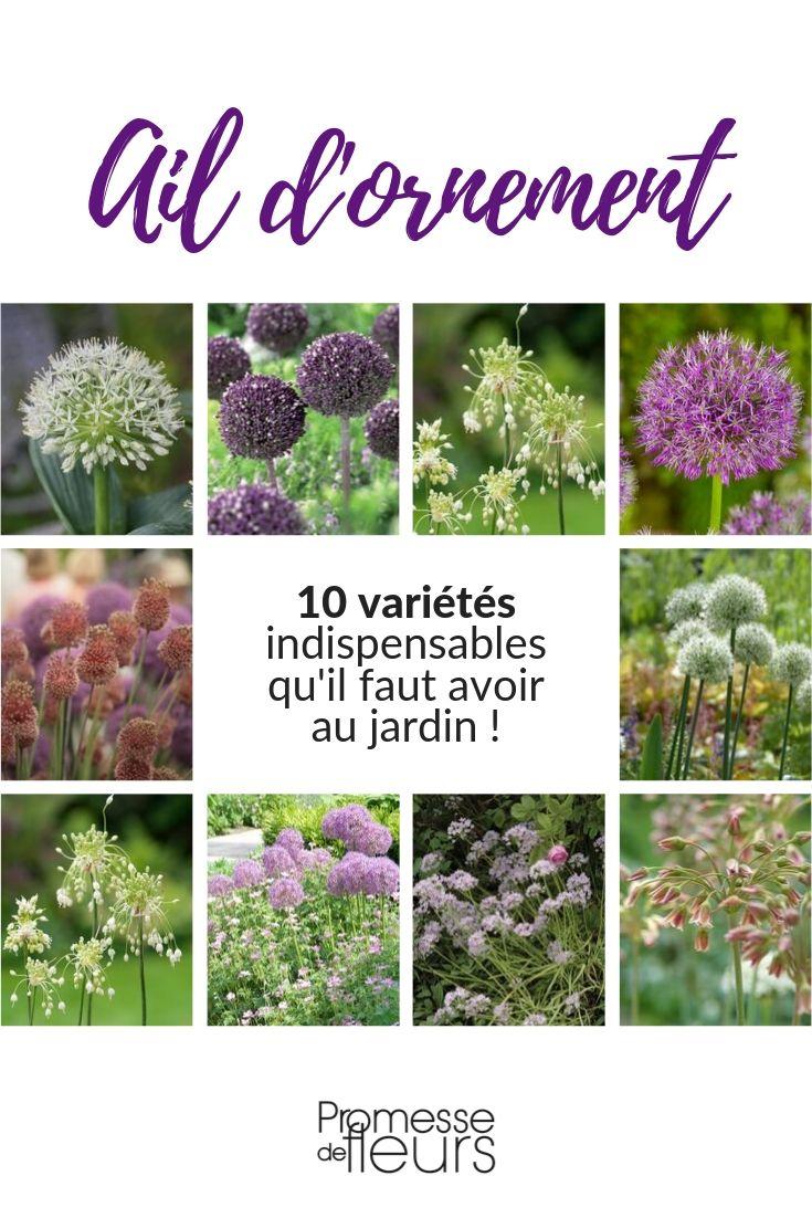 ail d'ornement : 10 variétés indispensables au jardin