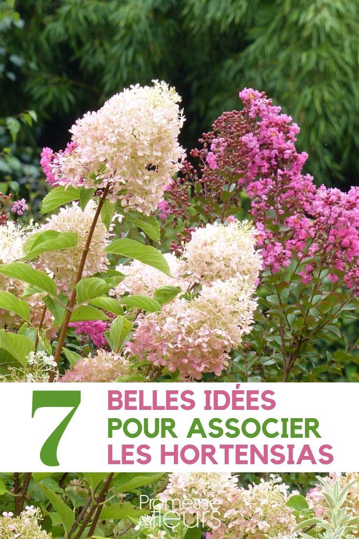 Associer les hortensias : 7 idées