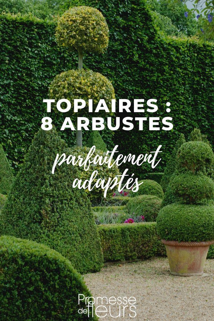 Arbuste Persistant En Pot Plein Soleil topiaire : 8 arbustes parfaitement adaptés