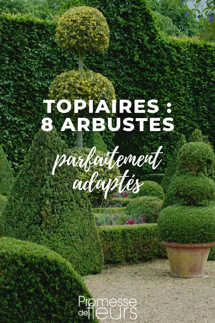 Topiaire : les arbustes adaptés
