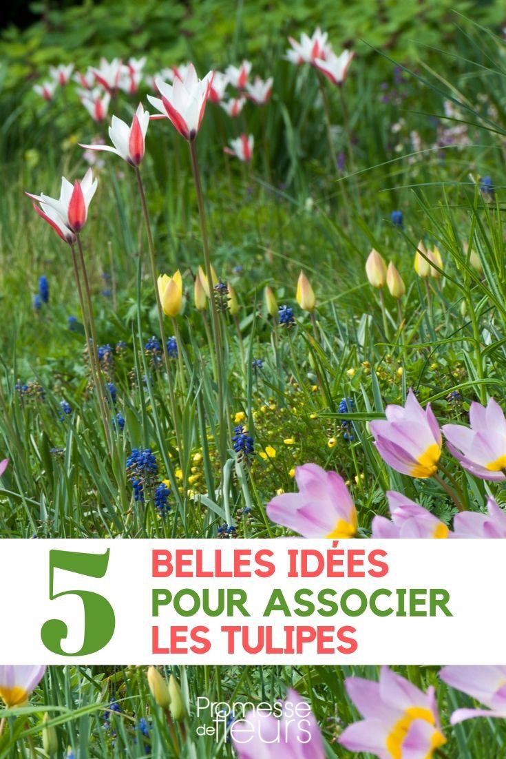 associer la tulipe au jardin
