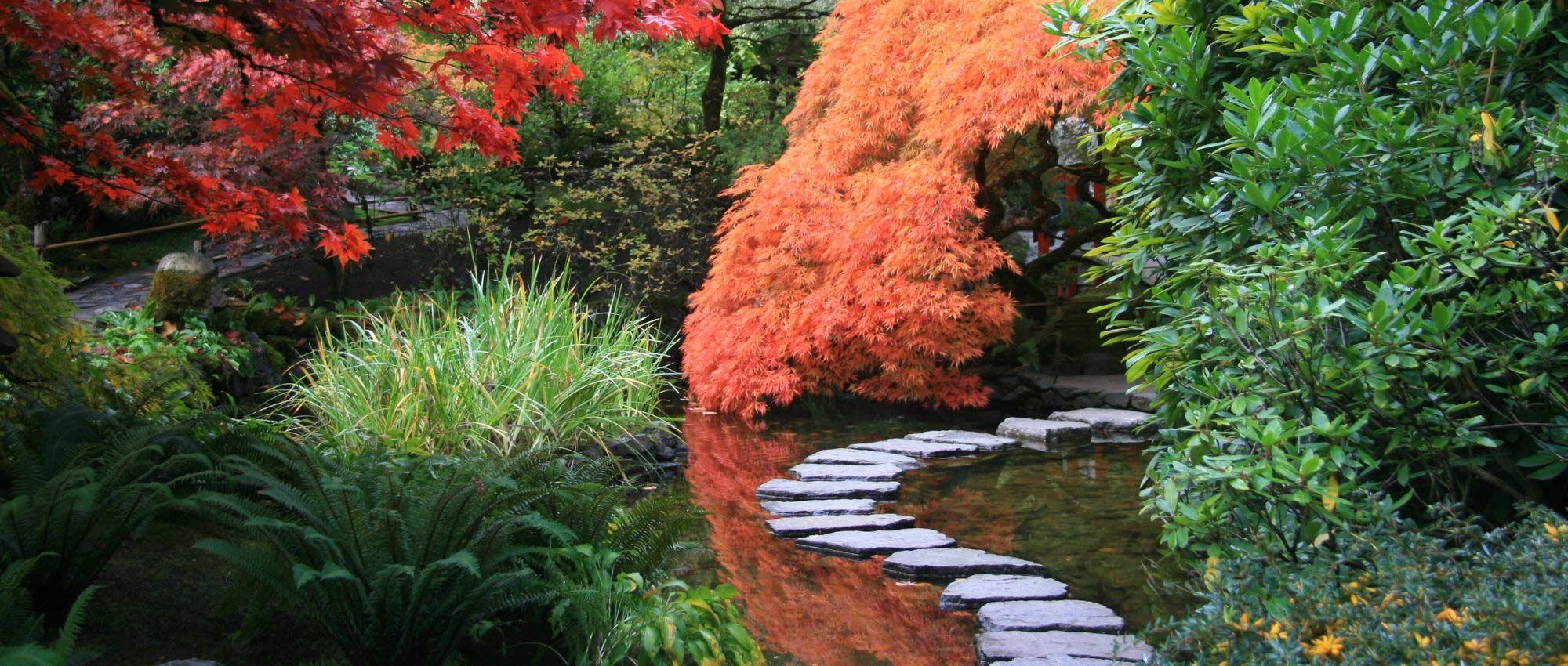 9 plantes vivaces pour jardin japonais