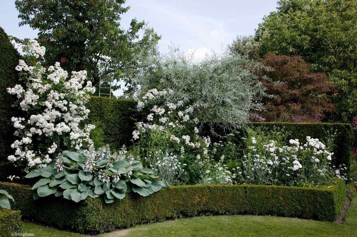 Planter Une Bordure De Buis buis : plantation, taille, entretien - promesse de fleurs