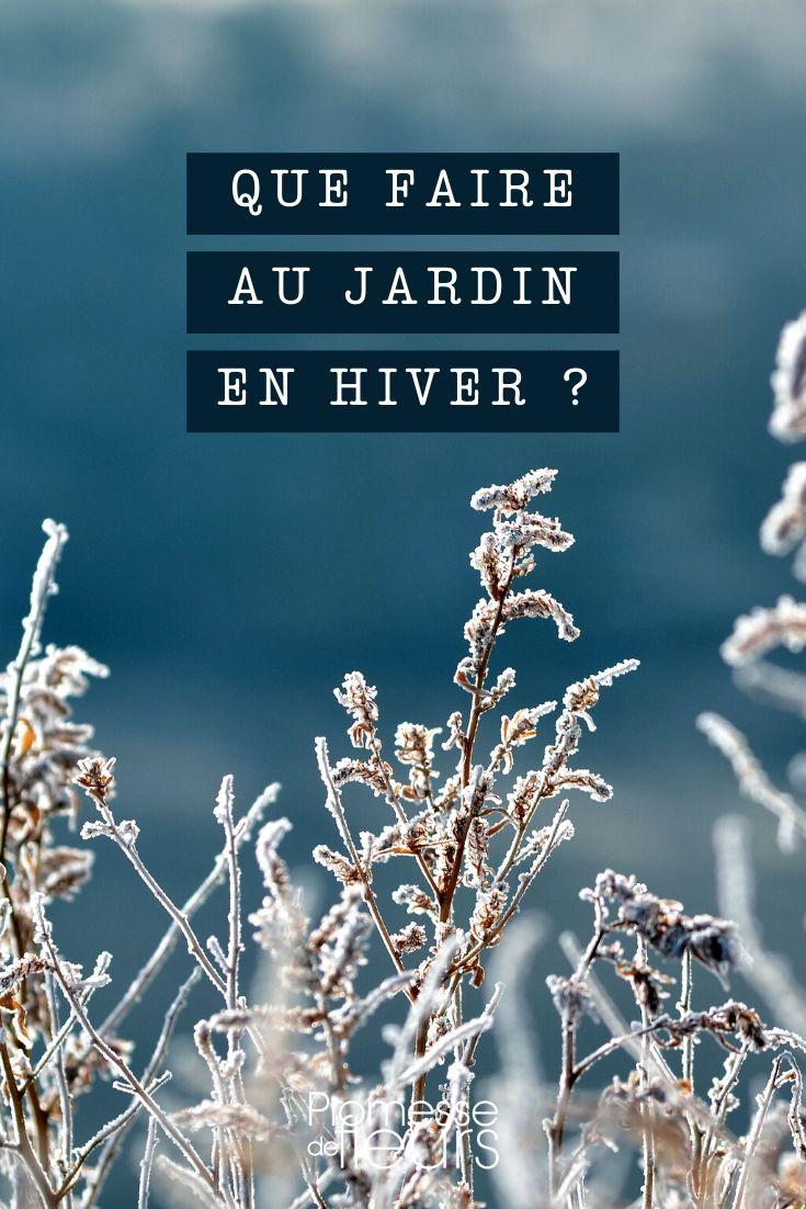 hiver : que faire au jardin ?