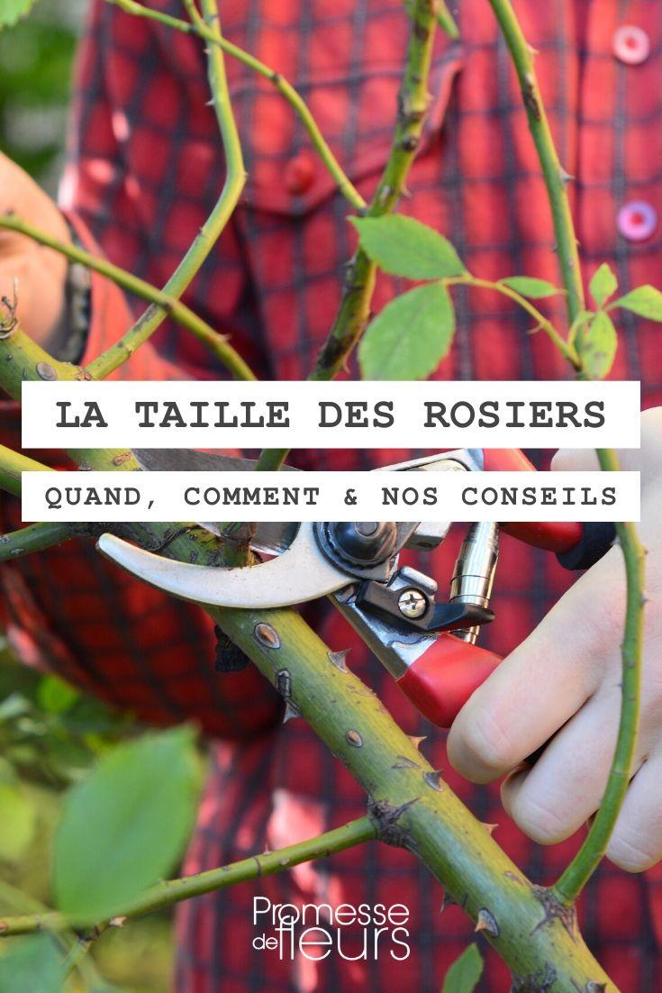 Quand Et Comment Tailler Une Passiflore la taille des rosiers : comment faire ? explications et conseils