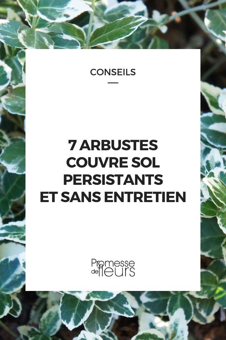 arbustes persistant couvre sol