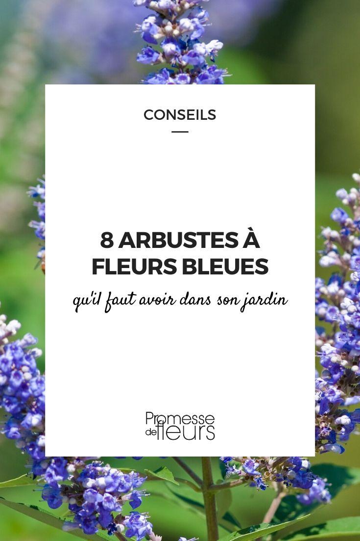 arbustes à fleurs bleues
