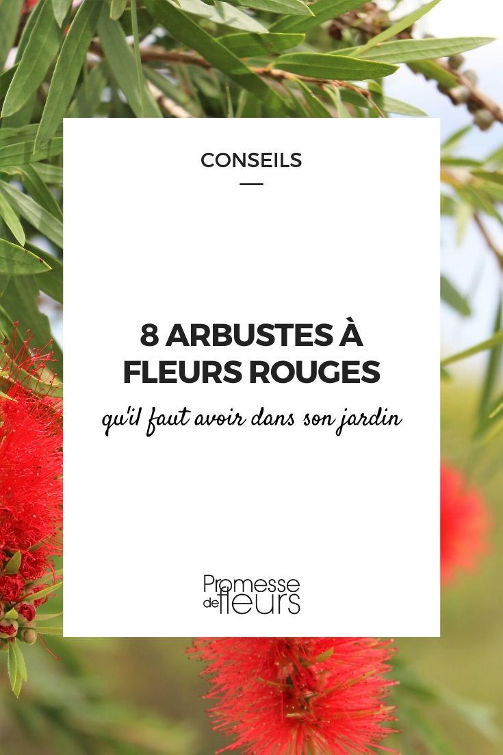 Arbustes à fleurs rouges : les indispensables