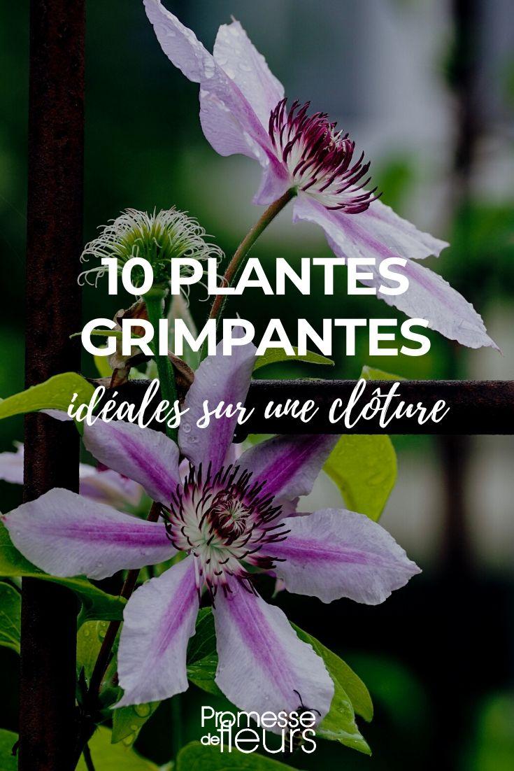 Graines De Fleurs Qui Poussent Très Vite 10 plantes grimpantes idéales pour habiller les clôtures