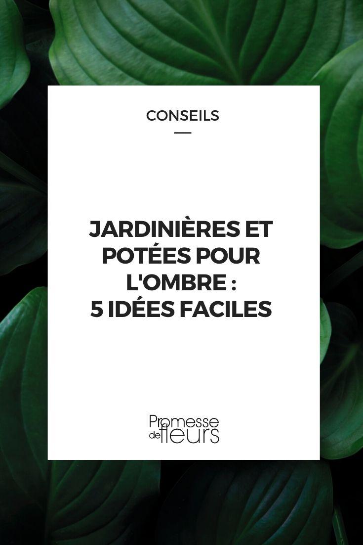 Idées pour jardinières à l'ombre