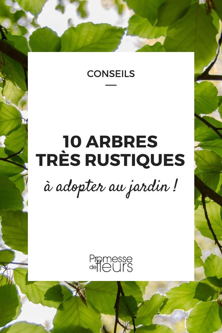 10 arbres très rustiques pour tous les jardins