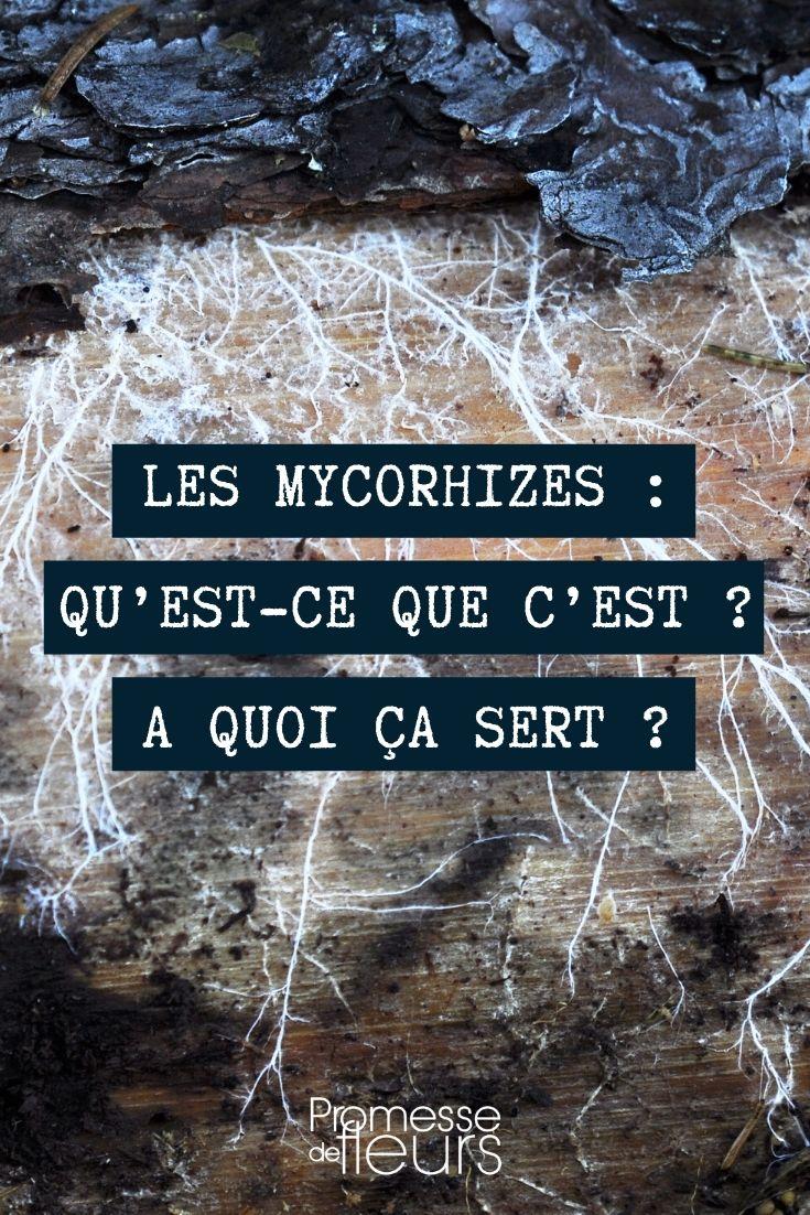 Mycorhizes au jardin