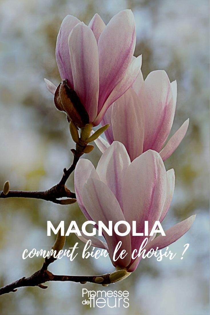 Magnolia : bien le choisir