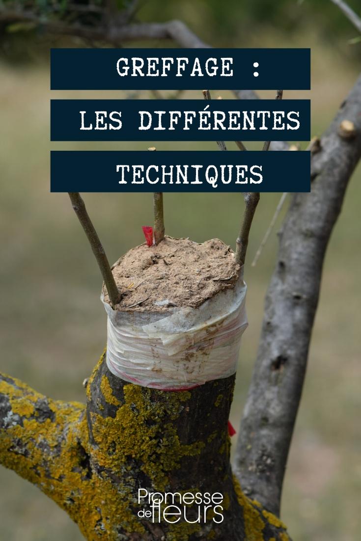 Greffer un arbre : les différentes techniques