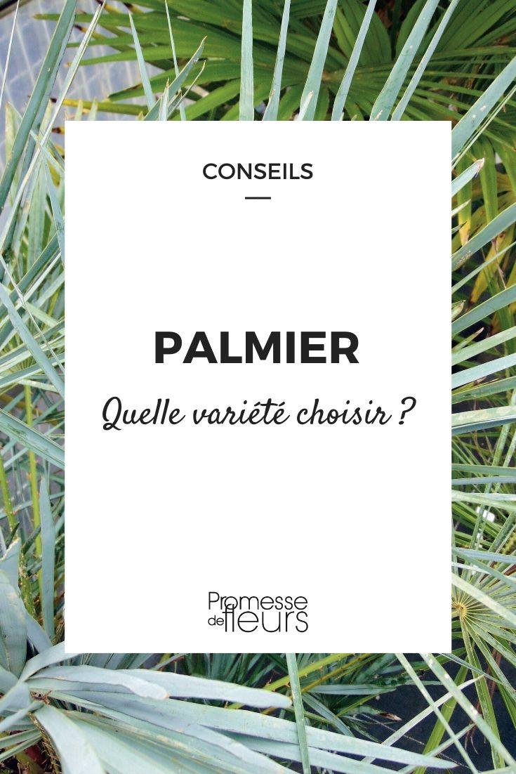 Bien choisir son palmier