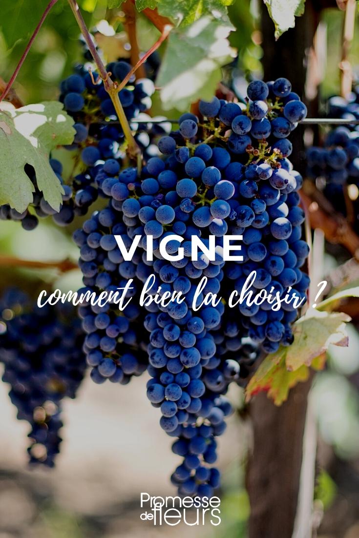 Vigne : faire le bon choix - Guide d'achat