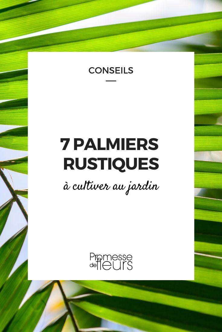 palmiers rustiques à cultiver au jardin
