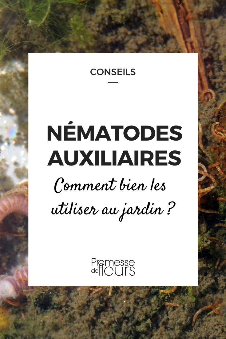 Nématodes auxiliaires : comment bien les utiliser au jardin ? Nos conseils