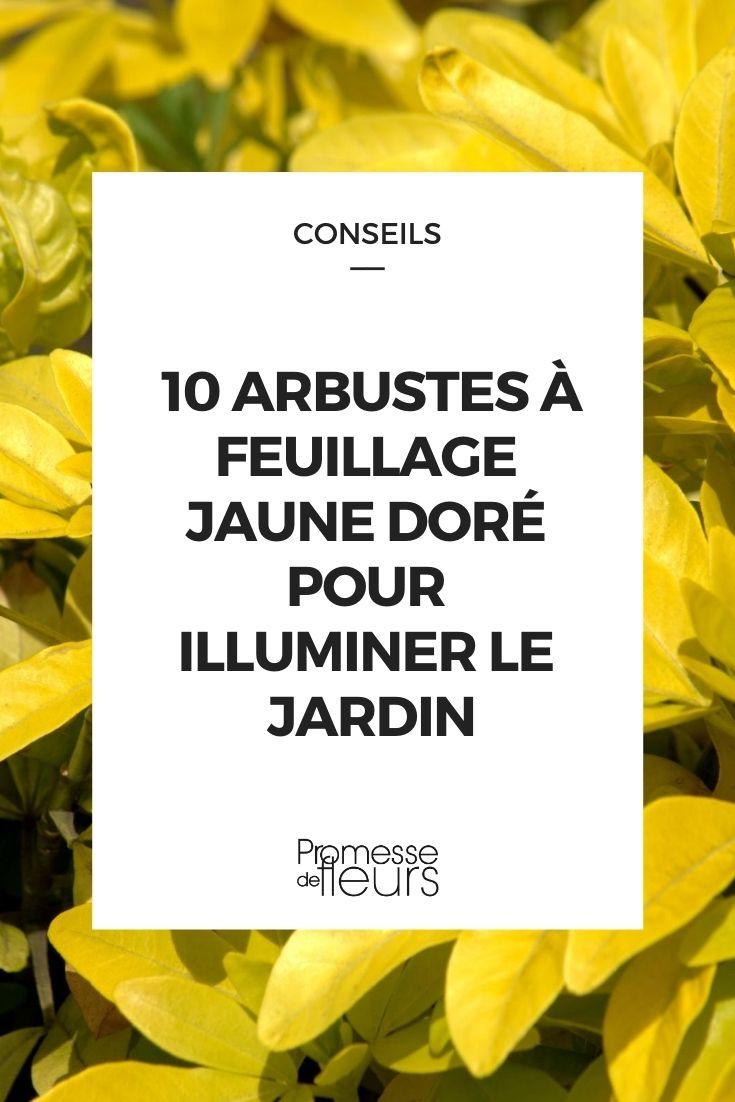 10 arbustes à feuillage jaune doré pour illuminer le jardin