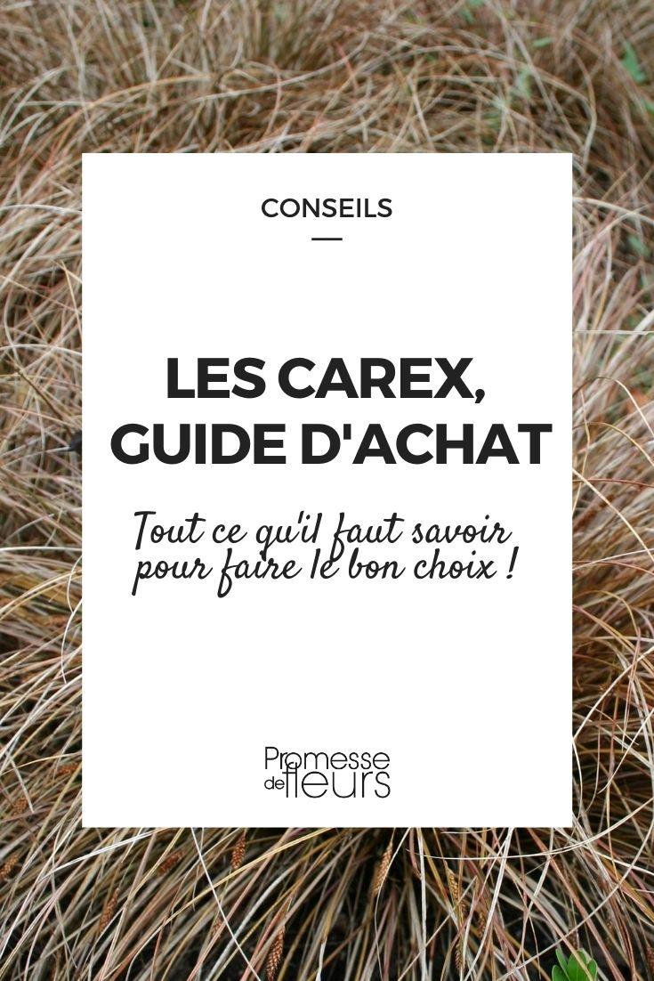 Les Carex : guide d'achat