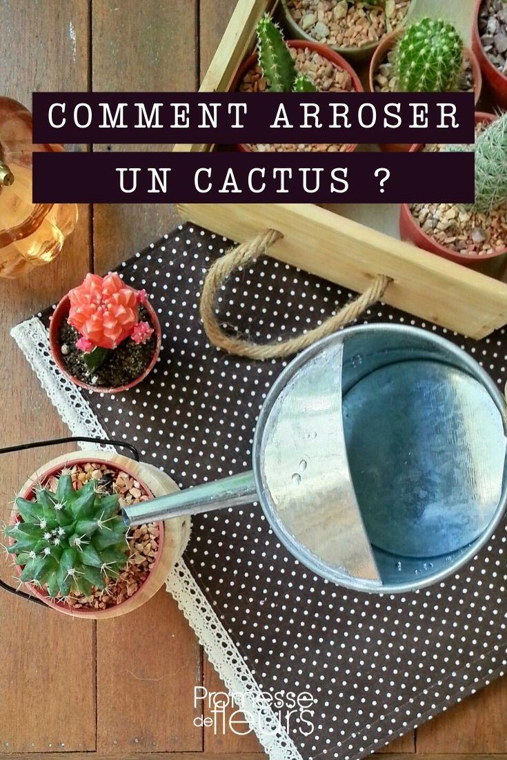 cactus : comment bien arroser ?